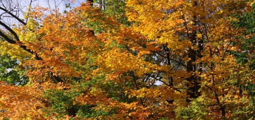 2009-10-14 12-53-15